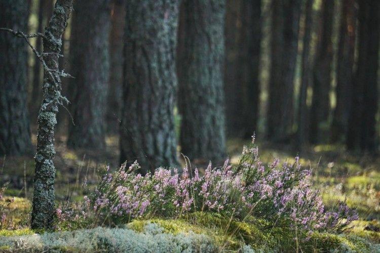 У Цуманських лісах висадився десант