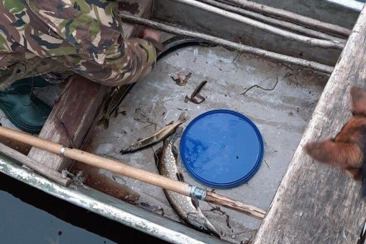 На Волині продовжують масово красти рибу: викрито 25 порушень (Фото)