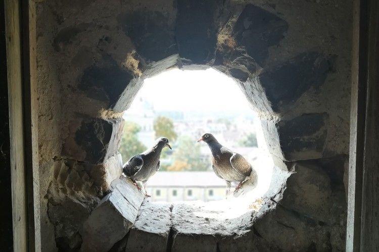 Побачення в замковій вежі