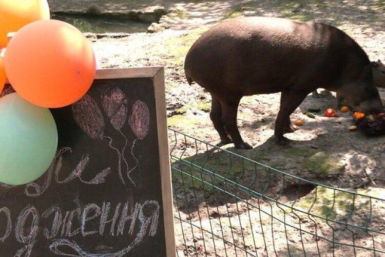 У Рівному відзначили день народження тапіра Майї (Фото, відео)