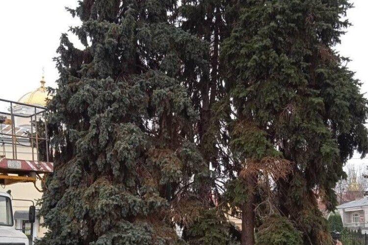 Головні ялинки Луцька будуть золотистими: відомо, коли їх засвітять (Фото)
