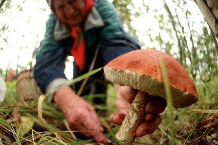 Жінка приготувала до столу страву з грибами й ледь не померла