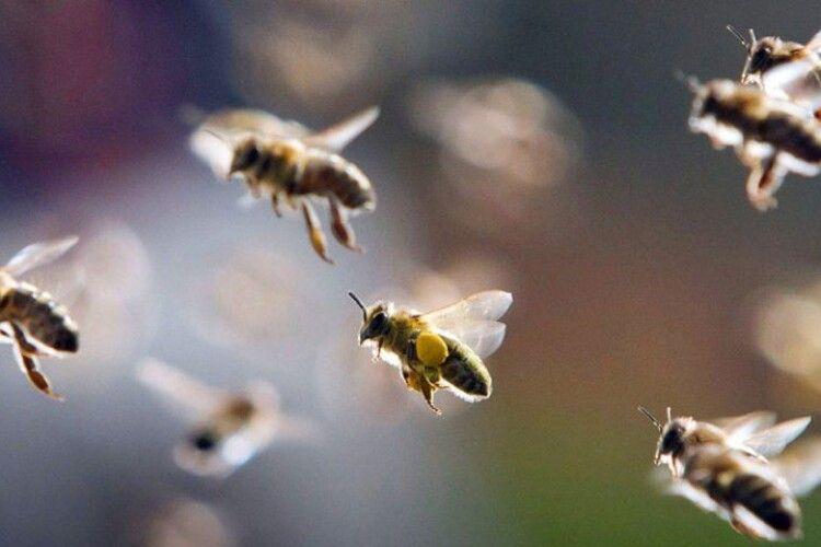 Бджоли напали на подружжя та коня