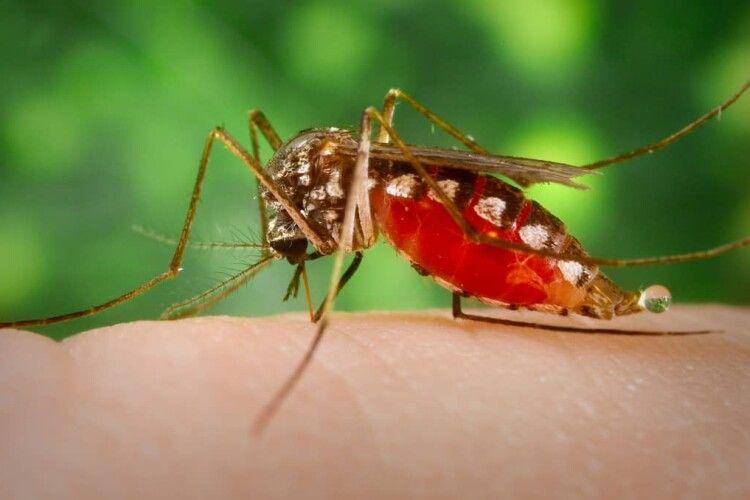 Протягом доби лучани зібрали достатньо підписів для оголошення війни комарам та кліщам