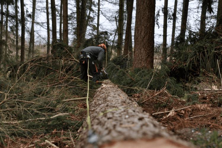 Боротьба за ліс: прозорі аукціони проти «чорних лісорубів»