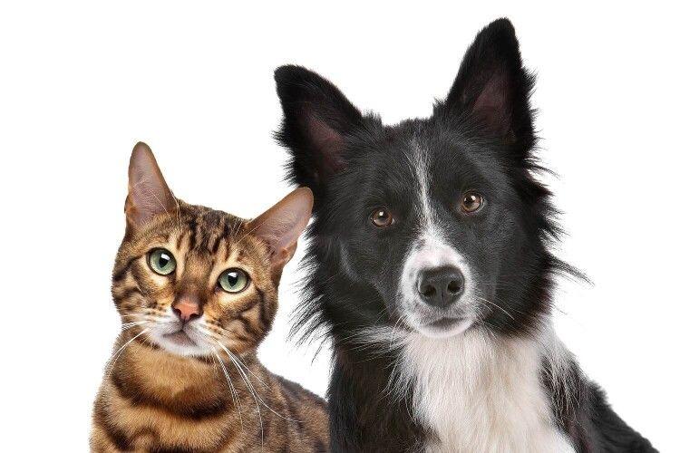 Українцям можуть заборонити держати у квартирі більше одного кота чи собаки