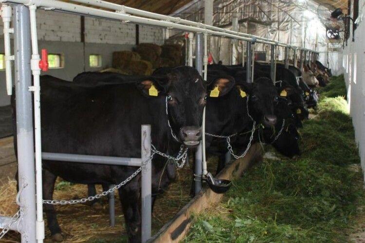 На Волині відкрили ще одну сімейну молочну ферму
