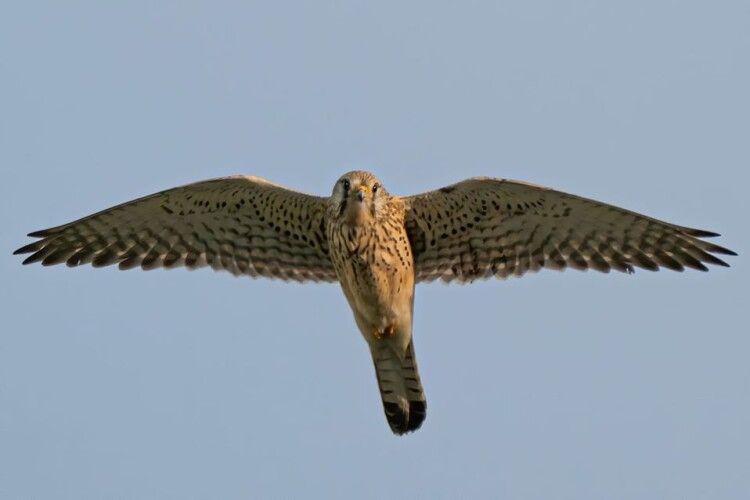 Рівненський фотомисливець влаштував грандіозне полювання на птахів (Фото)
