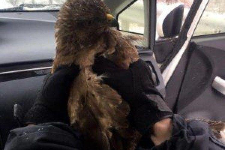 Патрульні поліцейські врятували хижого птаха