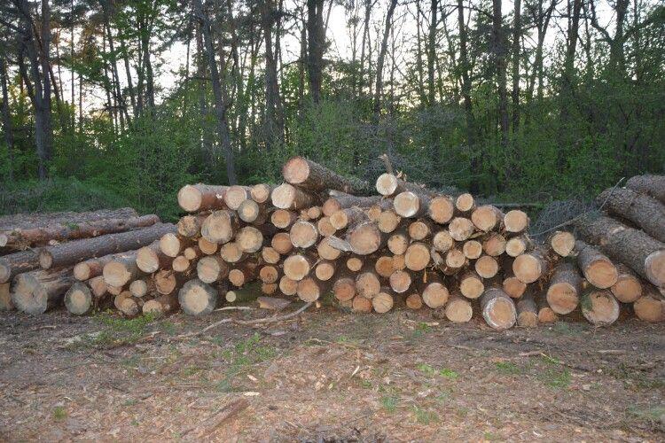 139 колод необлікованої деревини виявили у лісі на Горохівщині