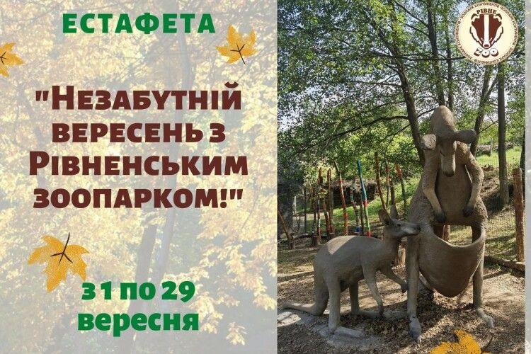 Рівненський зоопарк запрошує до участі в осінньо-кенгурячій естафеті