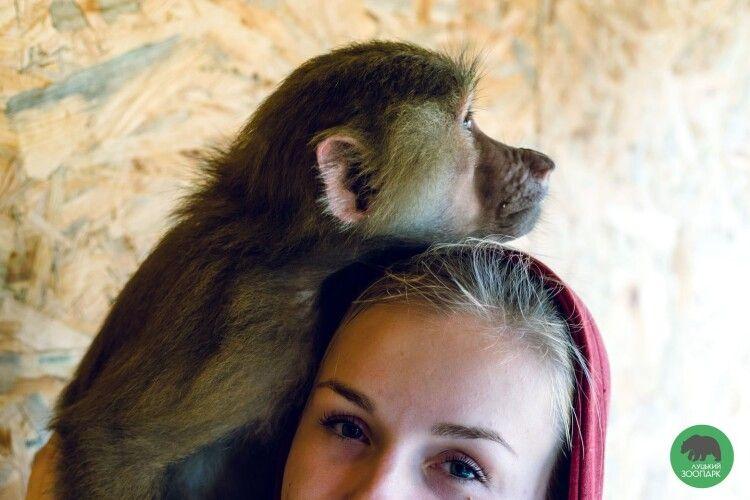 У Луцькому зоопарку мавпи повилазили людям на голови (Фото)