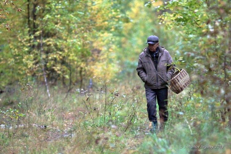 Селяни пішли по гриби, а знайшли вибухівку (Фото)