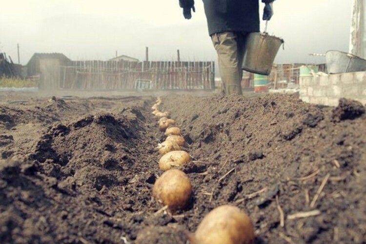 Весна прийшла – саджати будуть: на Херсонщині вже готуються до посадки картоплі