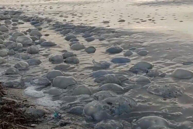 Екоактивіст пояснив, чому туристи отримують опіки в Азовському морі, навіть не торкаючись медуз