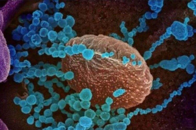 Мутований штам коронавірусу набагато заразніший