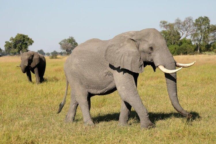 В Іспанії слониха хоботом вбила чоловіка