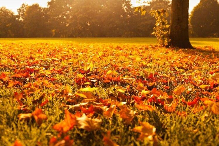 Синоптики обіцяють цієї осені ще +20º