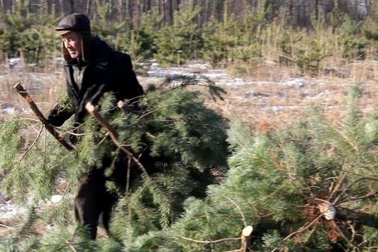 Новорічні свята закінчилися, а в лісі і далі крадуть сосни