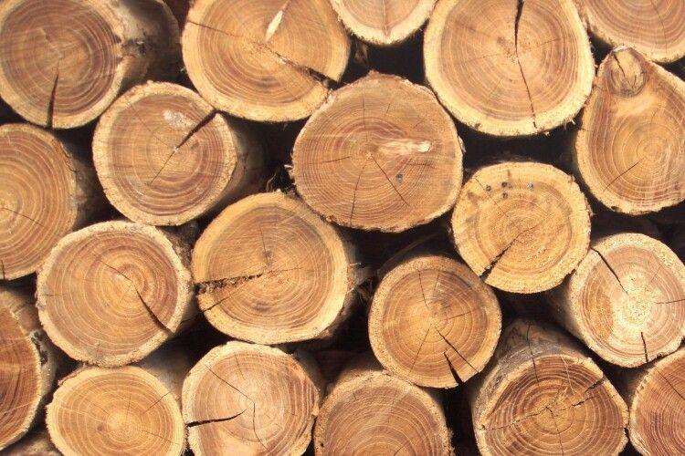 Колишній директор лісгоспу на Рівненщині піде під суд за крадіжку деревини на більш як 600 тисяч гривень