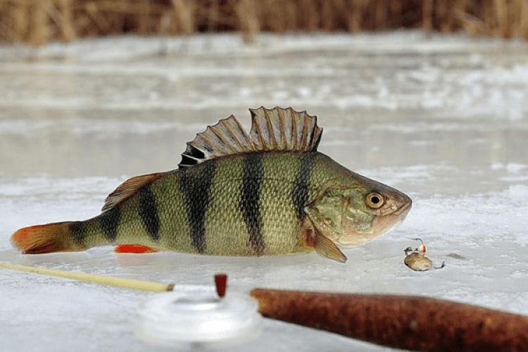 Позавтрому волинських рибалок та рибалкинь кличуть на Люцимер – змагатися, хто більше насмикає окунців