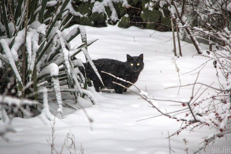Перший сніг в Україні може випасти вже в жовтні, – метеоролог