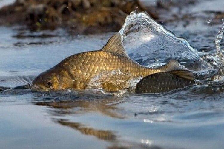 На Шацьких озерах оголошено нерестовий період