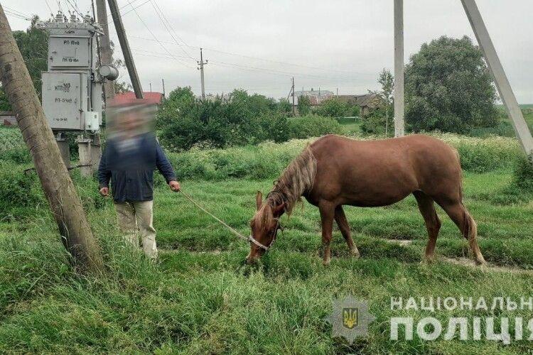 На Рівненщині п'яний селянин дорогою додому вкрав пару коней