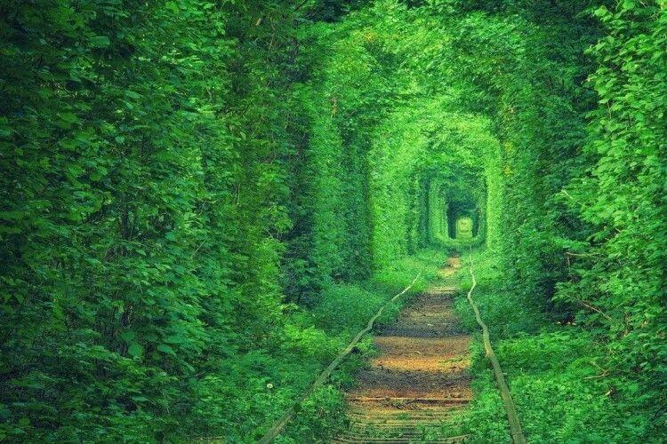 В Японії уже милуються рівненським Тунелем кохання