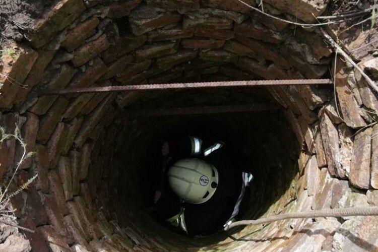 Бійцям ДСНС довелося рятувати цуценя, яке впало у глибочезний колодязь (фото)