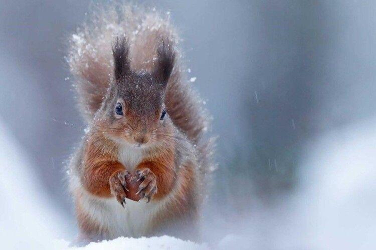Синоптики прогнозують аномальну зиму