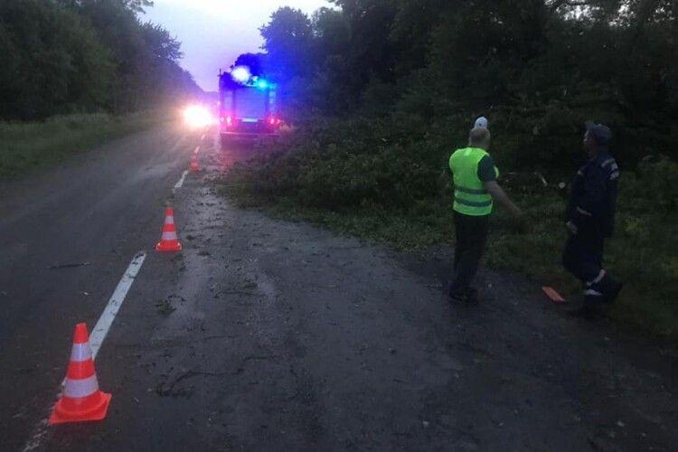 Через негоду на Рівненщині повалило дерева