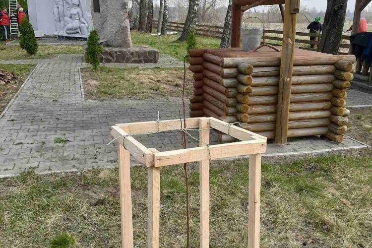 У Запрудді на Камінь-Каширщині ростиме груша Лесі Українки