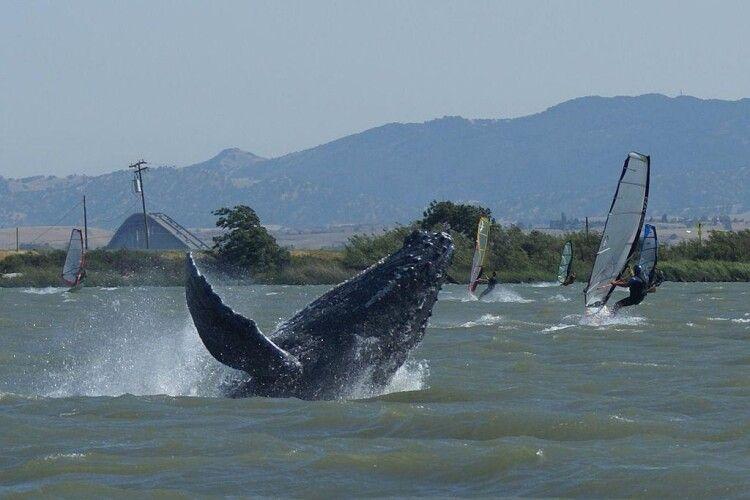 У річці в Австралії з'явилися кити
