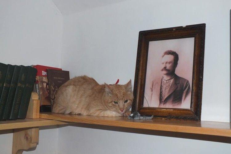 Коло Франка тепер мурлика кіт Мурлика (фото)