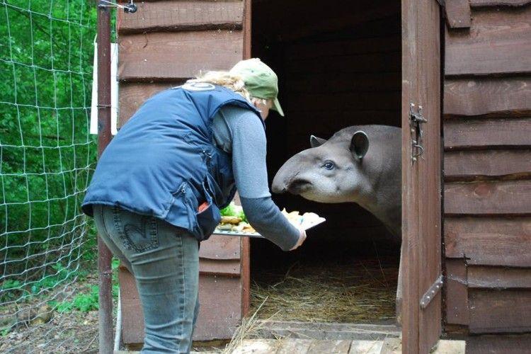 Рівненський зоопарк шукає робітника з догляду за тваринами (фото)