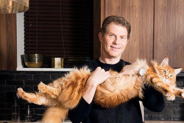 Кіт майстра з приготування бургерів у телешоу став зіркою соцмереж