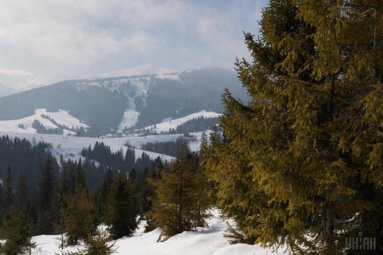 Кабмін обмежив суцільні рубки лісів у Карпатах