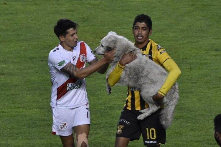 Бездомний пес став футбольною зіркою в Болівії (Фото, відео)