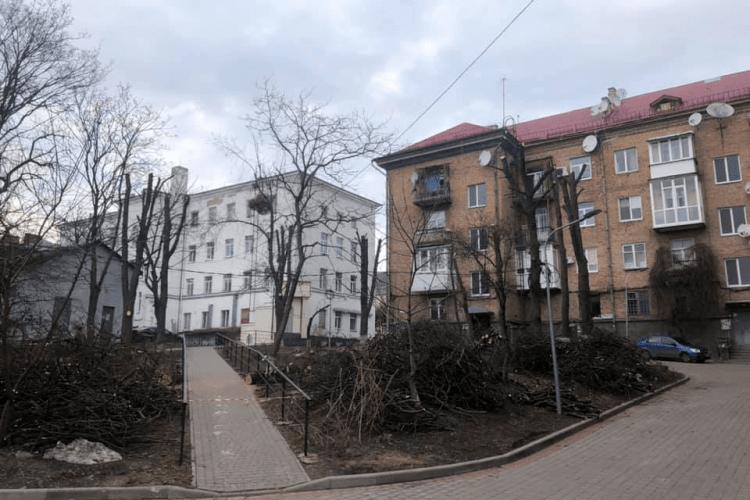 У Луцьку покарають ОСББ, які обрізають дерева до стовбурів
