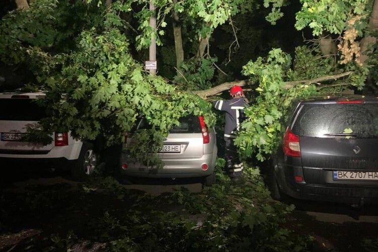 Буревій у Рівному: вночі дерево впало на три автівки (Фото)