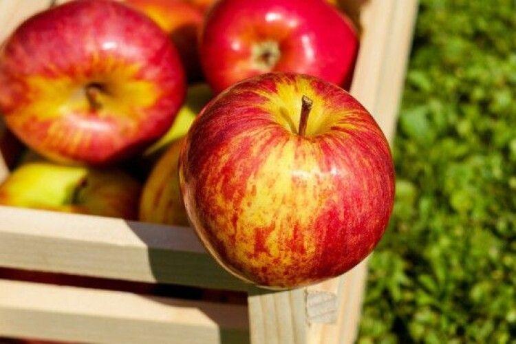 В Україні рекордно здорожчали популярні сорти яблук