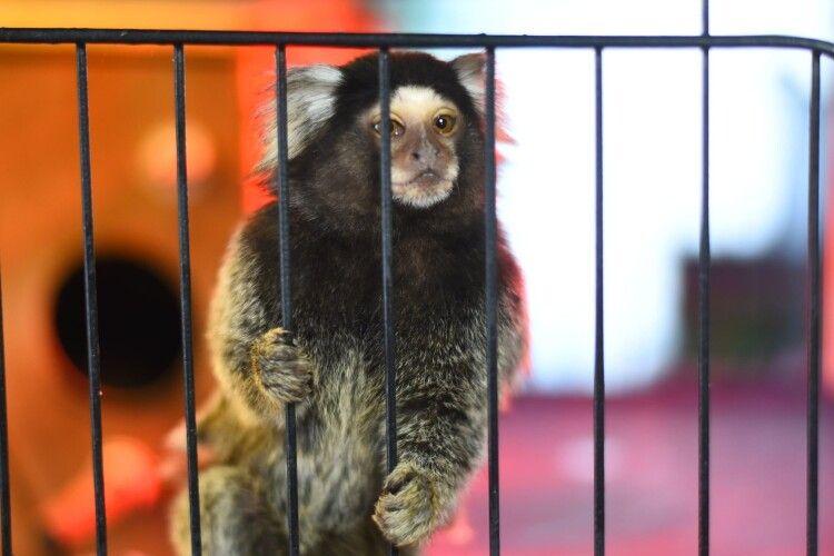 До Луцького зоопарку привезли нове милоття (Фото)