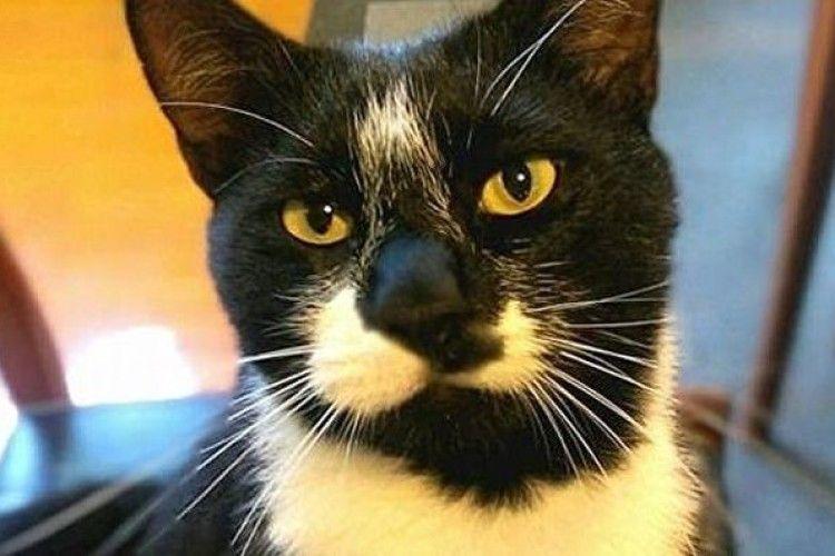 У Новій Зеландії кіт носив господареві нижню білизну сусідів