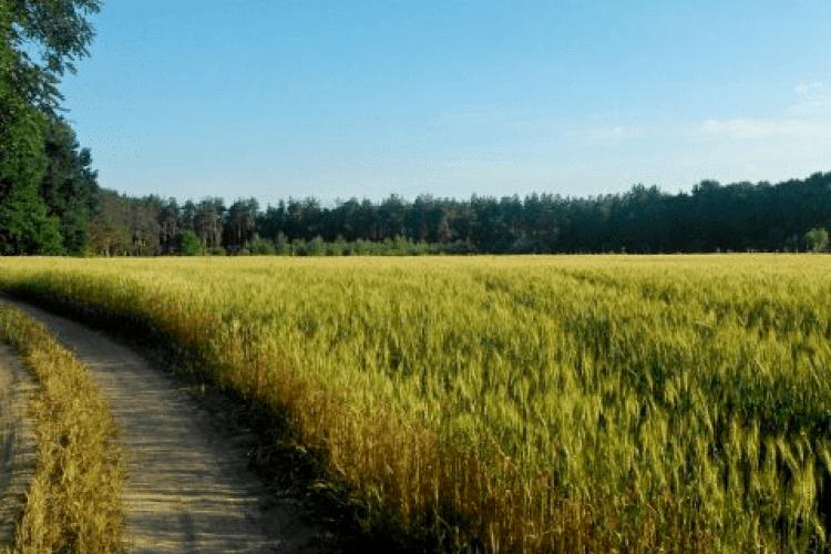 Біля Ковеля продали землю за понад три мільйони