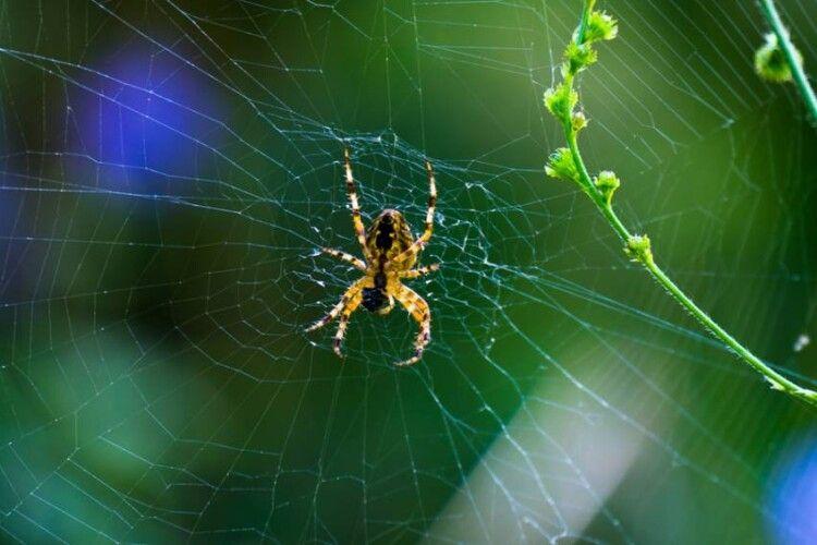 Погода на п'ятницю, 3 липня: головним синоптиком цього дня буде... павук