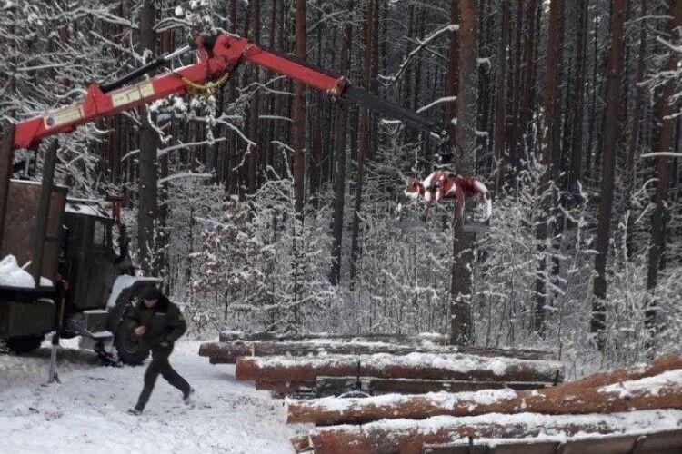 По ліс крадії приїхали трьома підводами: на Любешівщині їх спіймали на гарячому