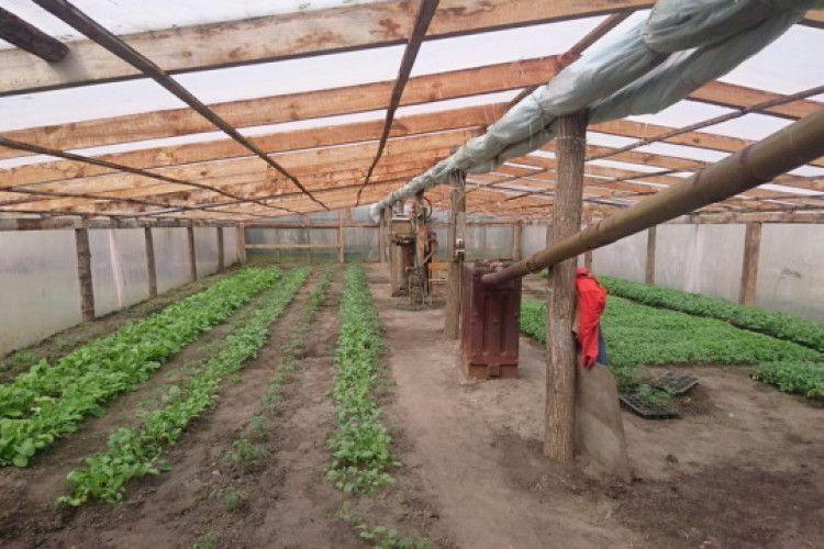 Волиняни обігрівали теплицю з редискою та помідорами… підпільним газопроводом (фото)