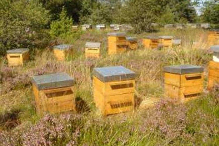 Зимового меду не буває