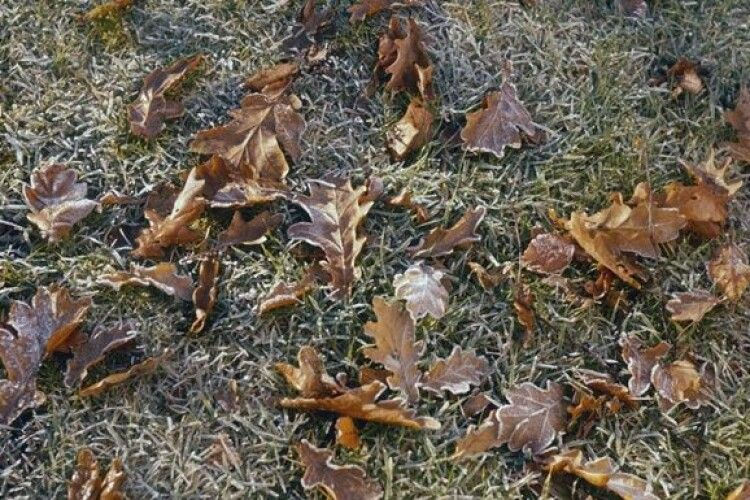 Очікується зміна погоди: похолодання і перші заморозки